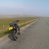 drz cat and fiddle.jpg